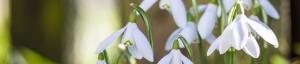 sbpc-spring-header