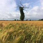 tree-300x300
